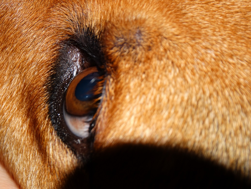 Weird Posts About Dog Eyelashes Truly Meing Me