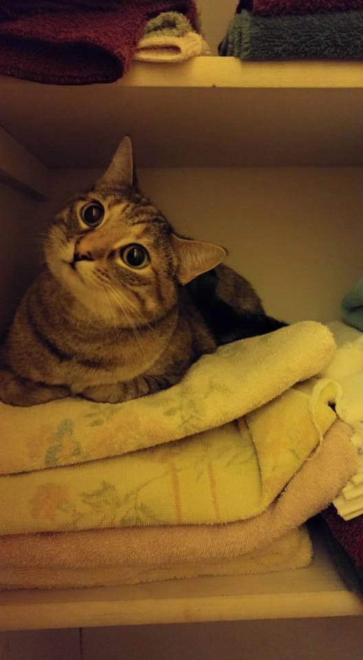 lily in the linen closet